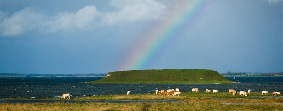 A photo showing cows eating grass by the water and a beautiful rainbow